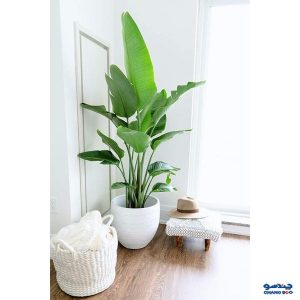 استفاده از لوازم دکوری و تزئینی و گلدان سفید